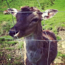 bambi ohne hörner